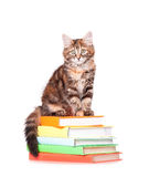 Kitten with books Stock Photo