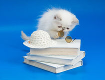 Kitten, Books And Glasses Royalty Free Stock Image