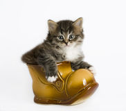 Kitten in a boot. One kitten sits in a ceramic boot royalty free stock images