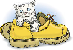 Kitten in boot. Stock Photography