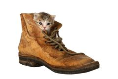 Kitten in Boot. Small kitten peering out of an old boot stock images