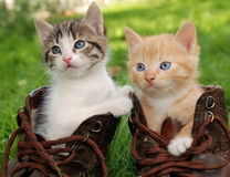 Kitten in boots. Couple of little kittens sitting in boots Stock Photography