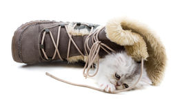 Kitten and boots Royalty Free Stock Image
