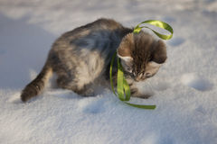 Kitten with a bow of green tape Stock Image