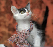 Kitten with a bow on neck. Funny black and white kitten with a bow on her neck Stock Image