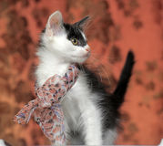 Kitten with a bow on neck. Funny black and white kitten with a bow on her neck Stock Images