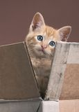 Kitten in box stock photo