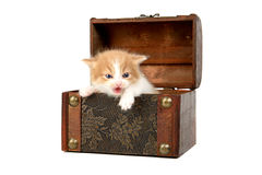 Kitten in a box Stock Images