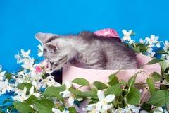Kitten in a box in flowers Stock Image
