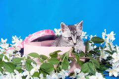 Kitten in a box in flowers Stock Images