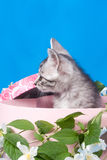 Kitten in a box in flowers Stock Photos