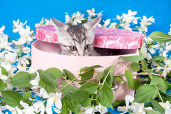 Kitten in a box in flowers Royalty Free Stock Photo