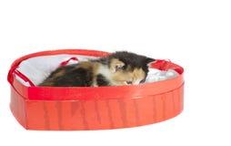 Kitten in box isolated. Kitten in heart-shaped box isolated jn white Stock Photos