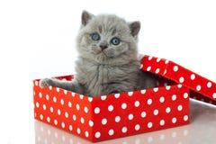 Kitten in a box Stock Image