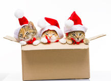Kitten in a box Royalty Free Stock Images