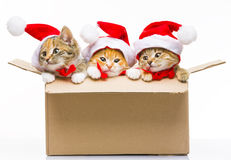 Kitten in a box Royalty Free Stock Photography