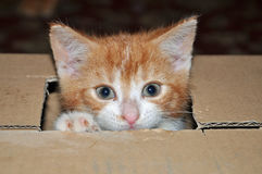 A kitten in a box Royalty Free Stock Images