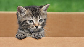 Kitten in a box Stock Image