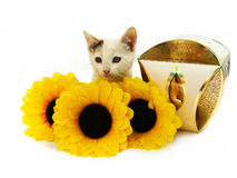 Kitten, box of sweets and yellow flowers Stock Photo