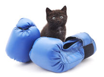 Kitten and boxing. Royalty Free Stock Photos