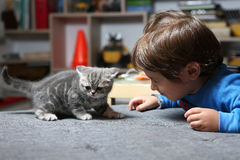 Kitten and a boy Stock Photo