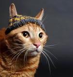 Kitten (breed - kurilian bobtail) Royalty Free Stock Photos