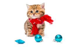 Kitten breeds British Marble in a red scarf. Cute kitten breeds British Marble in a red scarf, isolated on white Stock Images