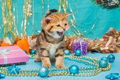 Kitten British breed and Christmas Stock Photo