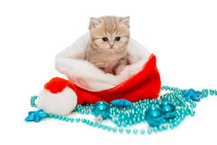 Kitten British marble and Christmas hat Stock Images