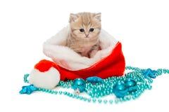 Kitten British marmor och julhatt Arkivbilder
