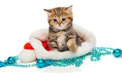 Kitten British marmor och julhatt Royaltyfria Foton