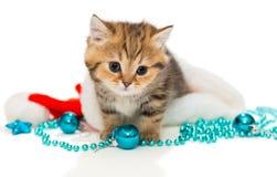 Kitten British och julhatt Arkivbilder