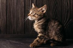 A lonely brown kitten sits on a dark background royalty free stock images