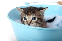 Kitten in a bucket Stock Photography