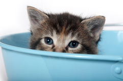 Kitten in a bucket Royalty Free Stock Image