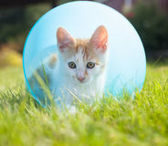 Kitten in a bucket. Small kitten playing outside in a bucket royalty free stock photography