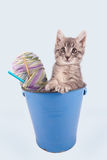 Kitten in a bucket. Stock Image