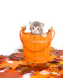 Kitten in a bucket Royalty Free Stock Photography