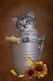 Kitten in a bucket Royalty Free Stock Images