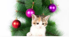 Kitten with a bulletin board on Christmas decorations Stock Images