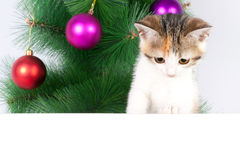 Kitten with a bulletin board on Christmas decorations Royalty Free Stock Photos