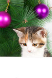 Kitten with a bulletin board on Christmas decorations Royalty Free Stock Image