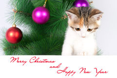kitten with a bulletin board and Christmas text Stock Photo