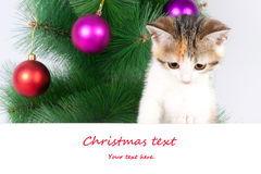 kitten with a bulletin board and Christmas text Stock Photos