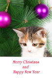 kitten with a bulletin board and Christmas text Stock Photography