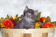 Kitten in bushel basket with flowers. Stock Photo