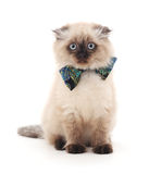 Kitten with butterflie. Royalty Free Stock Images
