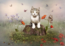 Kitten and butterflies. A kitten sitting on a stump in a field with poppies and butterflies Royalty Free Stock Images