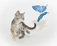 Kitten and Butterfly Stock Photos