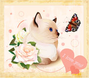 kitten, butterfly and roses Stock Image